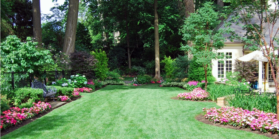 Landscaping-e_open-lawn-annuals