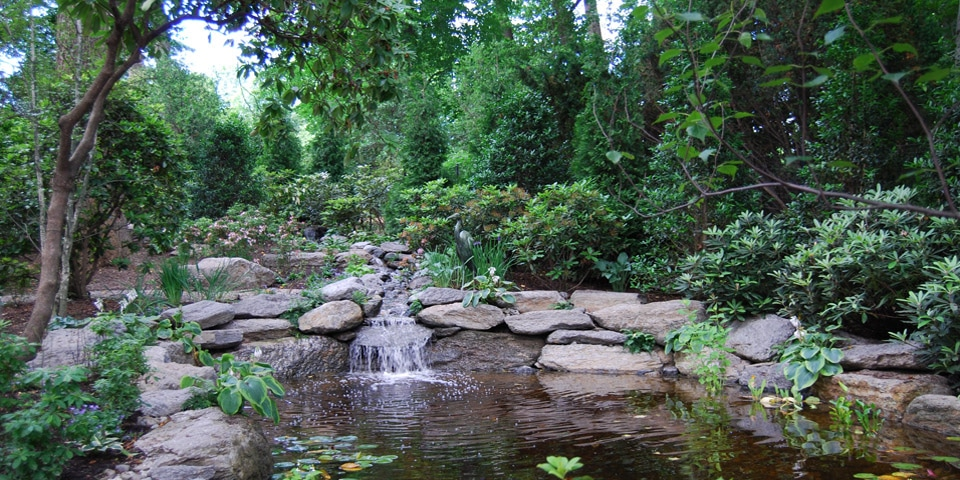 Ponds-a_natural-pond-and-waterfall